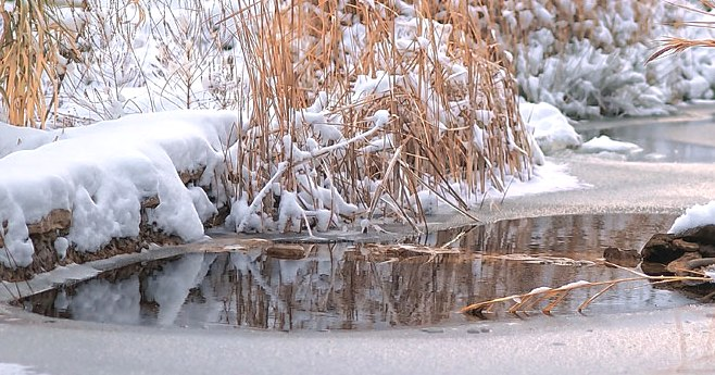 Teich3 Winter 659x344